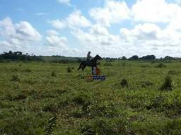 Sítio localizado nas proximidades da cidade de Nova Brasilândia Rondônia.
