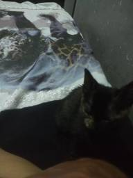 Doa- se 1 filhotinho de gato