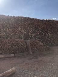 Lenha de acácia e eucalipto