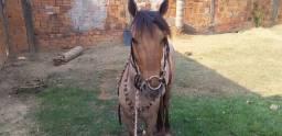 Cavalo petiço.