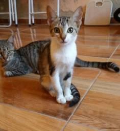 Doação de duas gatas