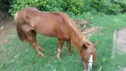 Linda égua porte grande