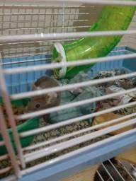 ? ratinhos - topolinos