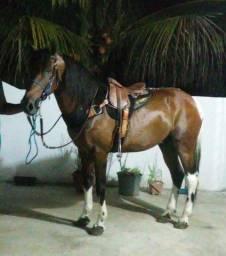Cavalo de passada