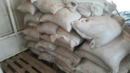 Feijão carioca saco 60kg (graudo)