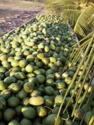 Coco verde top ! carga direto do nordeste