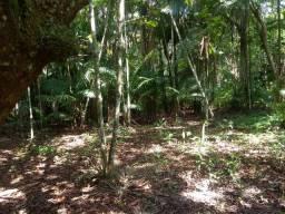 Vendo um terreno em marituba ele está com plantação de açaí  também pupunha e mangueira s