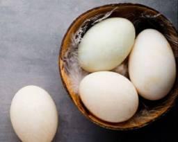 Duzia Ovos de Patos