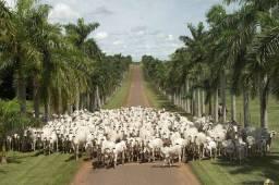 Gado/Fazenda