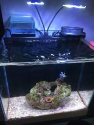 Vendo aquário marinho 37 litros