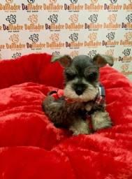 No Da Madre Pet Shop você encontra filhotes de Schnauzer, parcelamos!!