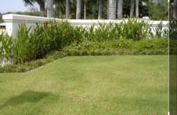 Limpeza em geral de jardinagem