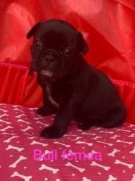 bulldog frances- os filhotes mais lindos!!!
