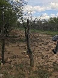 Fazendo 440 hectares, em Xique Xique-BA