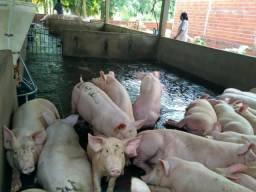 Sitio de 6 hectares, com uma Granja de suínos produzindo, á 23 km de Teresina