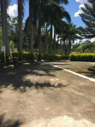 Vendo palmeiras imperial