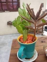 Três plantas na caneca todas por 35 reais