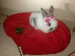 Doa- se duas coelhas