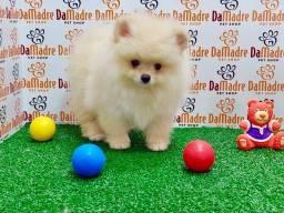 No Da Madre Pet Shop você encontra filhotes de Spitz Alemão, parcelamos!!
