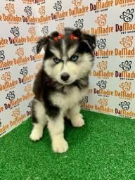 No Da Madre Pet Shop você encontra filhotes de Husky, parcelamos!!!