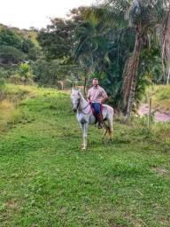 Vendo cavalo Manga Larga Registrado