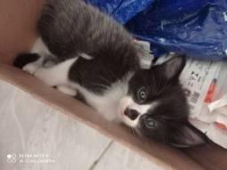Doação de de gatos filhotes