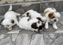 Belos filhotinhos