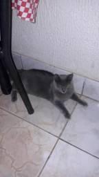 Estou doando dois gatos