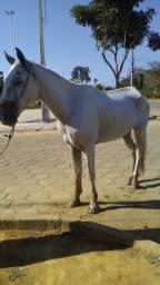 cavalo o nome ESTALORNE