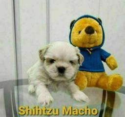 Shihtzu ligue já estamos esperando entregamos pra você