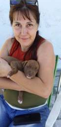 Pit Bull Red Nose Filhote