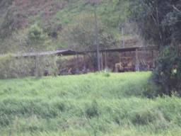 Fazenda de 50 alqueires em Silva Jardim, RJ