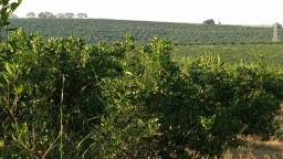 112 Alq - Laranja - Beira da Pista - 65% do pomar é novo - Avaí - SP