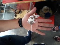 Ração Fanny banny roedor