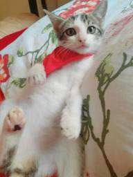Adote a gatinha Frozen ,2 meses