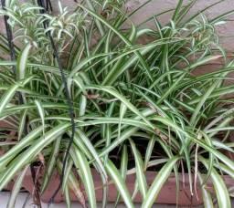 Vasos pequenos, plantas para por em jardim