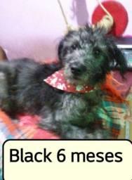 BLACK 6 MESES DOACAO