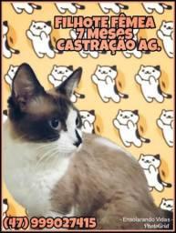 Protetoras anunciam gatos castrados para adoção responsável - Doação Blumenau