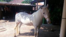 Vende-se cavalo  raça petisco