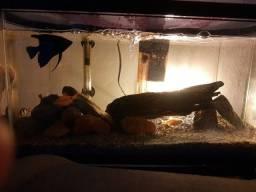 Torro aquário