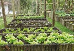Fazemos hortas e serviços em pomar e jardinagem