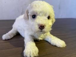 Poodle número 1 PEDIGREE