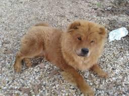 Vendo cadela com 06 meses !