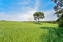 50 Alqueires - Fazenda de Soja - 11km Lapa - 121 Hectares