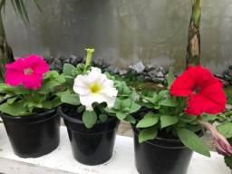 Flores em vaso - Atacado e Varejo