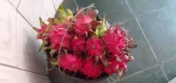 Vendo pitayas