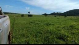 Fazenda 242 alqueires Extrema Rondônia