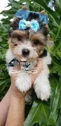 Yorkshire Terrier com as mais variadas colorações