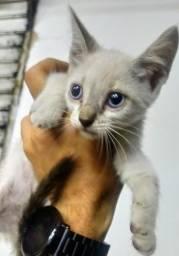 Gatinhos lindos para adoção (Arapiraca)