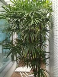Flora espaco verde